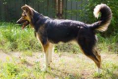Смешная собака Стоковое Изображение RF