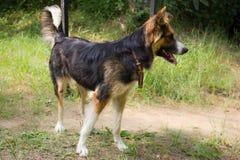 Смешная собака Стоковые Фотографии RF