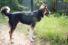 Смешная собака Стоковые Фото