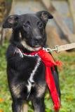 Смешная собака Стоковая Фотография