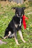 Смешная собака Стоковое Фото