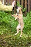 Смешная собака Стоковое фото RF