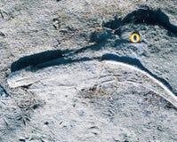 Смешная фея тайны быть гнить грязи driftwood Стоковые Фото