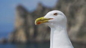 Смешная чайка смотрит в камеру и раскрывает ключ, окрики видеоматериал