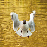 смешная чайка Стоковое Фото