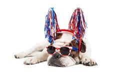 Смешная четверть собаки в июле Стоковое Изображение RF