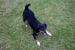 Смешное животное собаки вне домашнего животного парка Стоковая Фотография