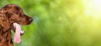 Смешное знамя собаки Стоковое Изображение