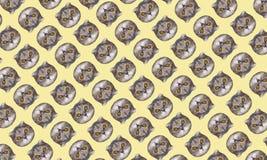 Смешное ` s кота возглавляет на желтой предпосылке Картина коллажа искусства моды стоковые изображения rf