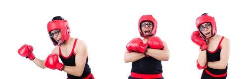 Смешной боксер изолированный на белой предпосылке стоковое фото