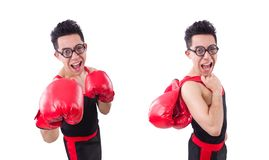 Смешной боксер изолированный на белой предпосылке стоковые изображения rf