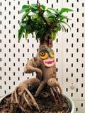 Смешной завод с большими глазами и ртом Зеленые похожие на лист волосы, hairsty стоковая фотография