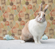 Смешной зайчик сидя на половике за красочной стеной Стоковая Фотография