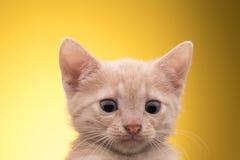 смешной изолированный котенок немногая белое Стоковое Фото
