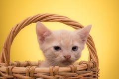 смешной изолированный котенок немногая белое Стоковая Фотография RF