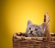 смешной изолированный котенок немногая белое Стоковые Фото