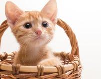 смешной изолированный котенок немногая белое Стоковое Изображение RF