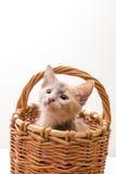 смешной изолированный котенок немногая белое Стоковые Изображения RF