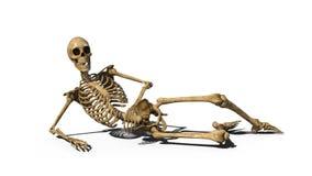 Смешной каркасный класть на землю и усмехаться, человеческий изолированный скелет на белой предпосылке, 3D представляют бесплатная иллюстрация