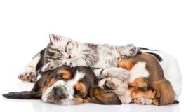 Смешной котенок лежа на гончей выхода пластов щенят Изолированный на whit Стоковые Изображения RF
