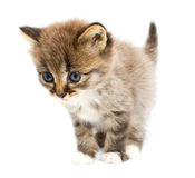 смешной котенок Стоковые Фотографии RF