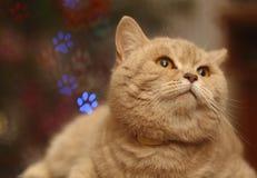 Смешной кот с bokeh для предпосылки Стоковое Фото