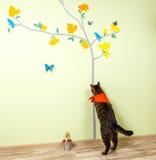 Смешной кот улавливает бабочек покрашенных на стене Стоковая Фотография