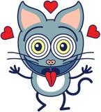 Смешной кот чувствуя сумашедше в влюбленности Стоковое Изображение