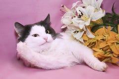Смешной кот Стоковые Изображения