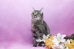 Смешной кот Стоковые Фотографии RF