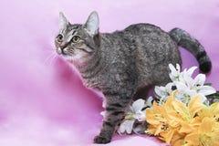 Смешной кот Стоковое Изображение RF