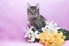 Смешной кот Стоковая Фотография RF