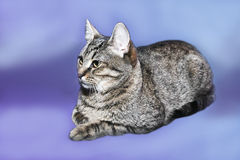 Смешной кот Стоковое Фото