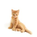 смешной красный цвет котенка Стоковые Изображения