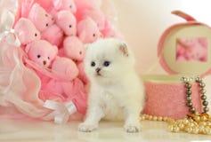 Смешной маленький великобританский котенок в розовой атмосфере стоковая фотография