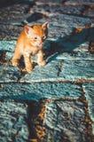 Смешной маленький красный котенок показывая язык Милый любимчик идет на старую дорогу в баре Stari, Черногории Стоковые Изображения