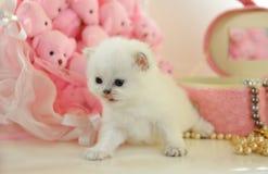 Смешной очень маленький великобританский котенок в розовой атмосфере стоковая фотография rf