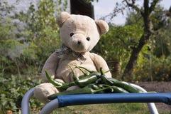 Смешной плюшевый медвежонок сидя на голубом месте с зелеными горячими перцами Стоковые Фотографии RF
