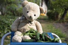 Смешной плюшевый медвежонок сидя на голубом месте с зелеными горячими перцами Стоковые Фото