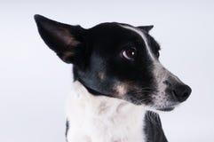 Смешной портрет крупного плана собаки Стоковые Фото