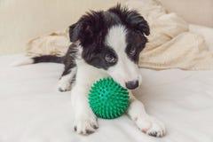 Смешной портрет милой Коллиы границы собаки щенка кладет на одеяло подушки в кровати и игру с зеленым шариком игрушки стоковое изображение rf