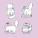 Смешной, сердитый кот в комплекте коробки Стоковые Фотографии RF
