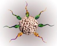 Смешной сперматозоид Обозначение ложной цели! Стоковое Изображение RF