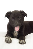 Смешной черный щенок Стоковые Изображения
