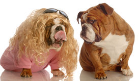 смешной щенок влюбленности Стоковые Фото