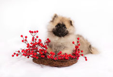 Смешной щенок на венке с красными ягодами Стоковые Изображения