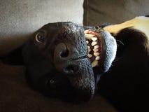 смешной щенок стоковые изображения rf