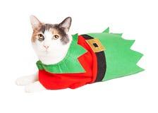 Смешной эльф рождества кота Стоковые Фотографии RF