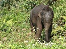 Смешной newborn слон младенца Первые шаги и исследовать мир стоковые изображения rf