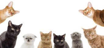 Смешной peeking котят Стоковое фото RF